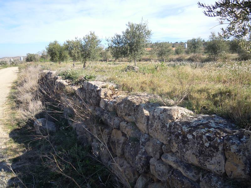 Pedra Seca i oliveres