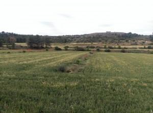 Vista dels sembrats