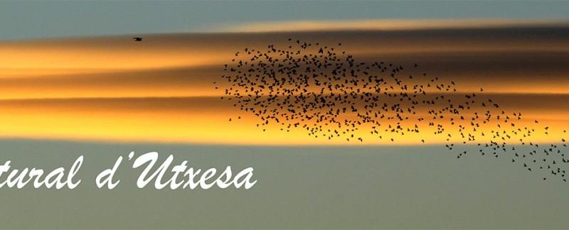 Utxesa-6.web-titolweb